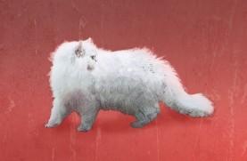MP_Cat
